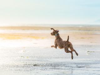 beach dog in low tide