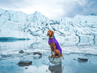 Glacier hikes with dog in Alaska