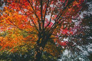 Vivaldi's The Four Seasons Autumn Activity