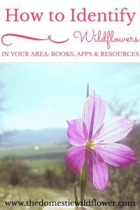 How to Identify Wildflowers In Your Area