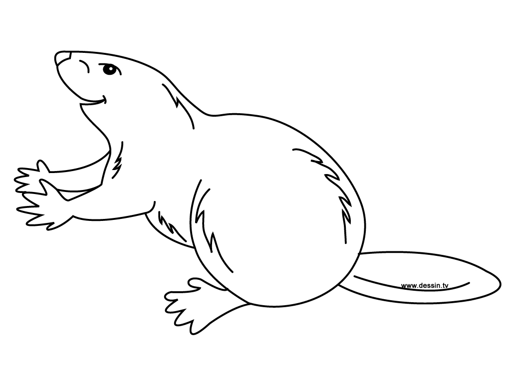Beaver Coloring Pages Sketch Coloring Page