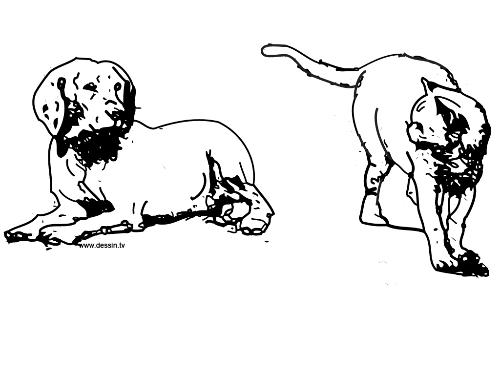 coloring cat and dog