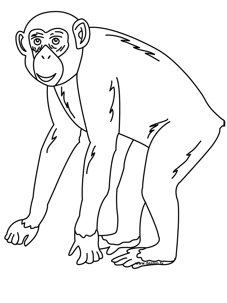 coloring chimpanzee