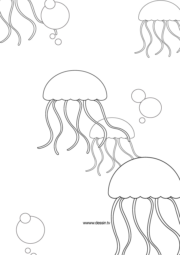 pin jelly fish coloring page on pinterest