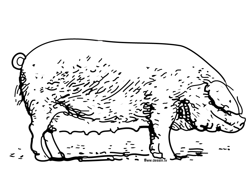 Boar Coloring Pages