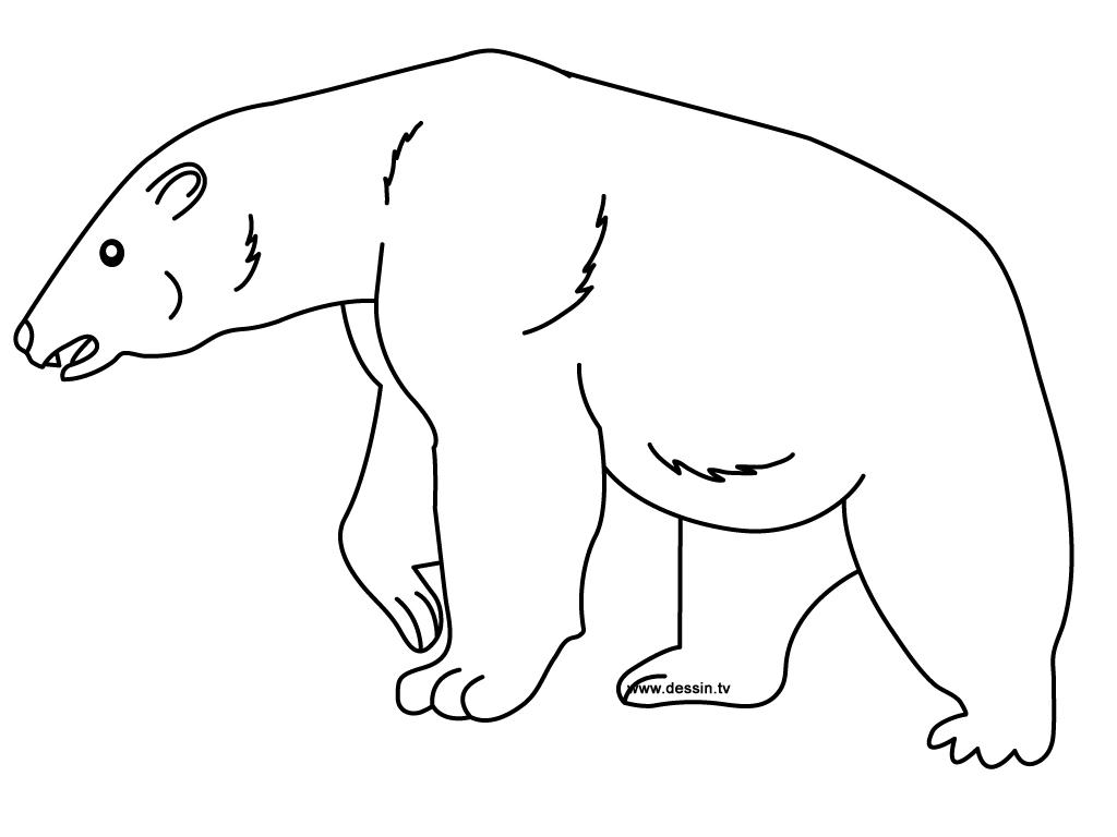 pics photos arctic fox polar fox coloring page for free