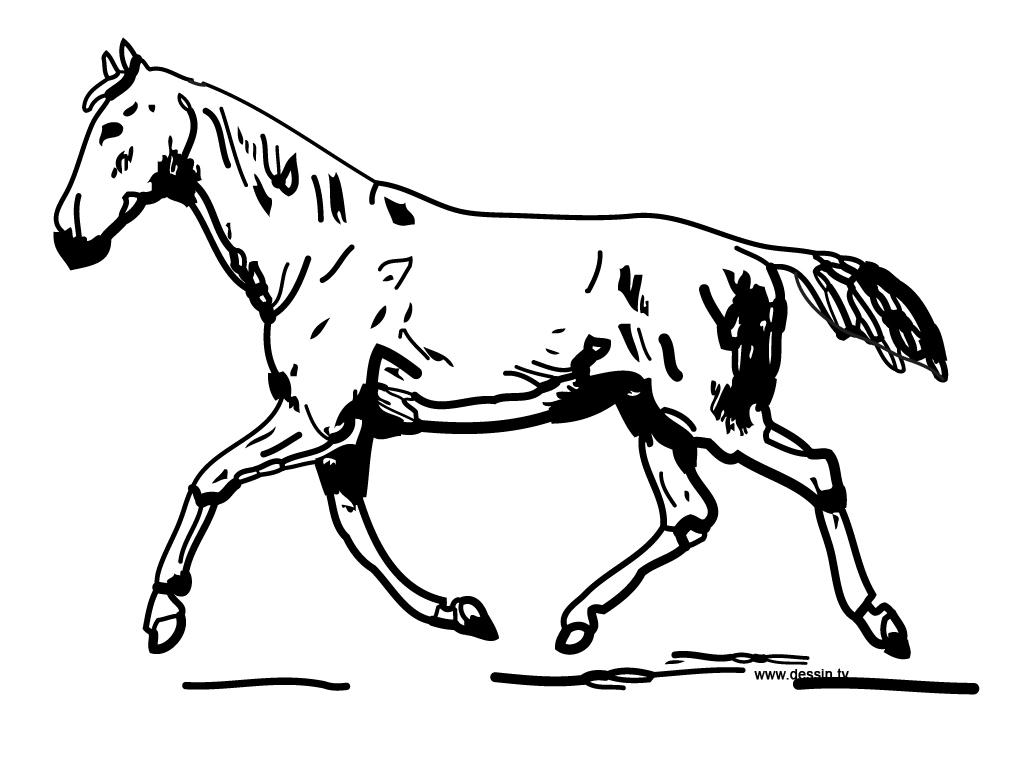 Model Horse Harness
