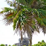 Traveling to the Tulum Ruins