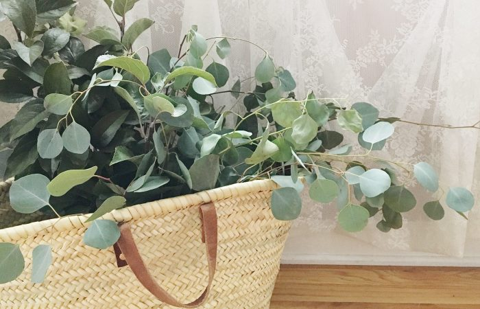 Winter Decorating with Fresh Eucalyptus