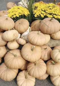 Heirloom Gourds are the New Autumn    Dreamery Events