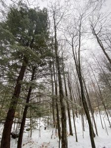 Traveling to ... a Winter Getaway House || New Hampshire || Dreamery Travels