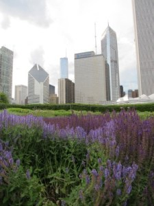 The peaceful Lurie Garden in Millennium Park, with the city skyline above.