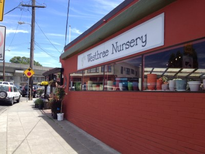 Westbrae Nursery is tucked away in a mixed residential and business district.