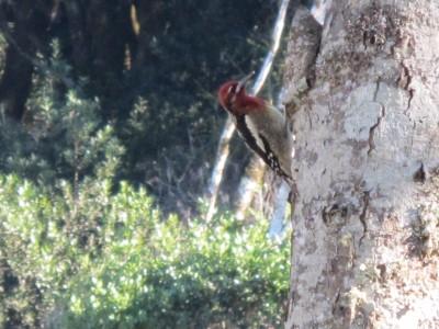 Spying a woodpecker.