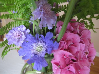 Blue Fama and scabiosa anthemifolia are a nice complement to the pink hydrangea.