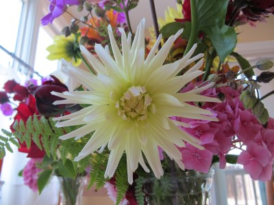 This dahlia, too, had a short season. Normally an early-blooming dahlia, it didn't last more than a month.