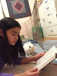 Isabella reading to her rabbit Pudding, February 2015.