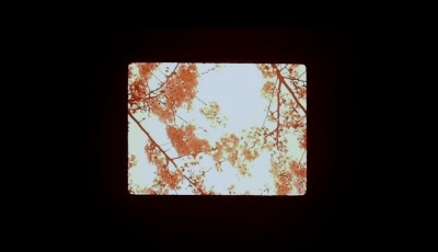 "Looking up at trees in a still from ""Mono No Aware."""