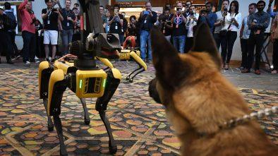 Spot Boston Dynamics 360 Walkthrough