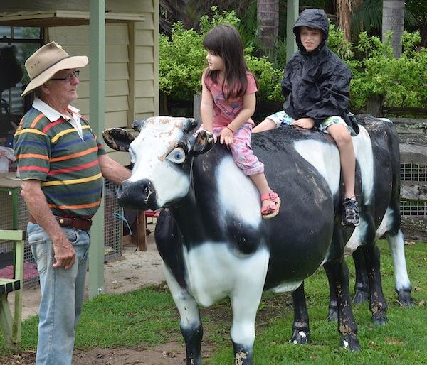 cow riding 240