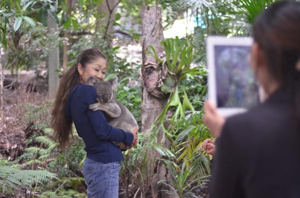 koala cuddling 246