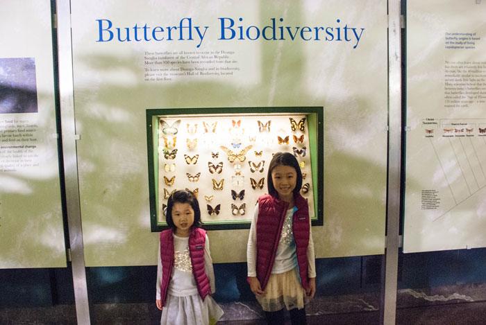 Butterflies and Dinosaurs