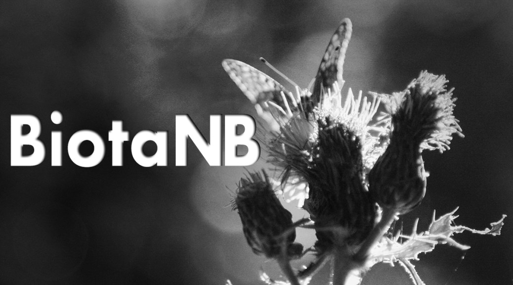 BiotaNB: Art Meets Science In The Deep Woods Of New Brunswick
