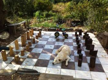 chess board with dog on it