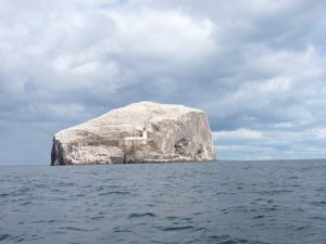 The swirling gannets of the Bass Rock