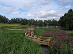 Inverleith Park Reeds