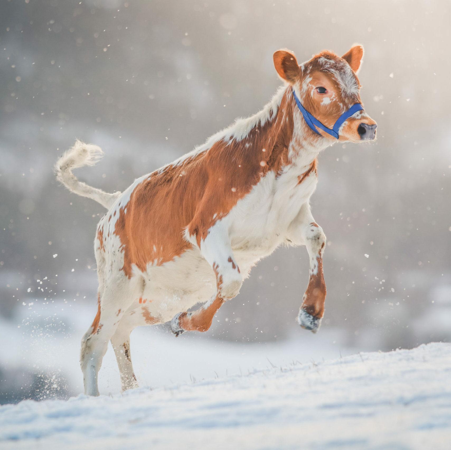 Winter Lani