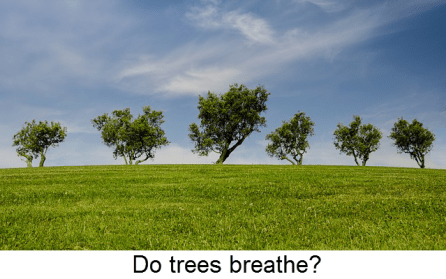 Do trees breathe
