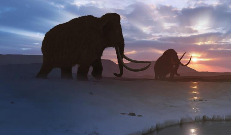 A new startup aims to revive the woolly mammoth