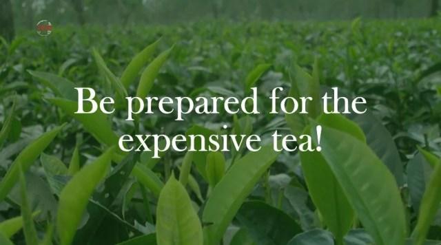Tea leaf plantation In India