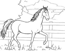 more horses for coloring the equinest