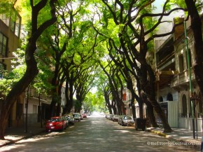 Tree lined streets of Soho Palermo Buenos Aires