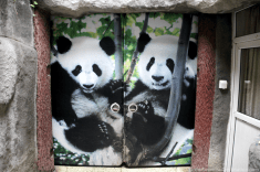 Door to the Pandas