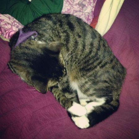 cat sleeping - www.mybottomlessboyfriend.com