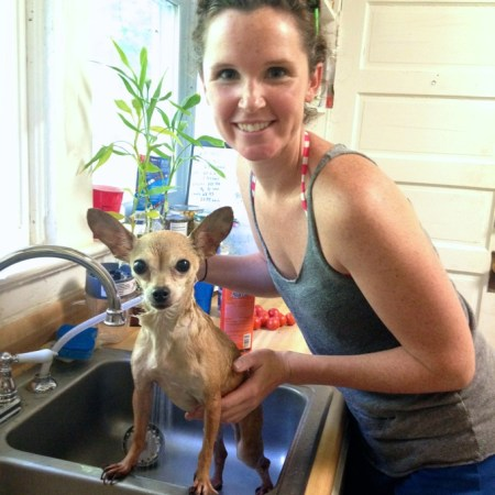This stray Chihuahua gets a flea bath | www.mybottomlessboyfriend.com