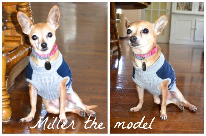Miller the model dog | www.mybottomlessboyfriend.com