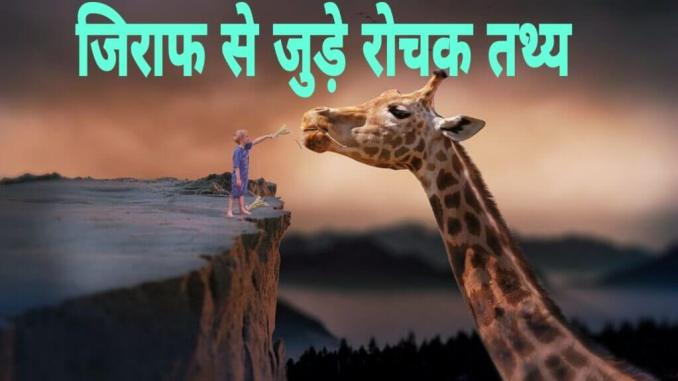 जिराफ के बारे में रोचक तथ्य | Amazing facts about Giraffe