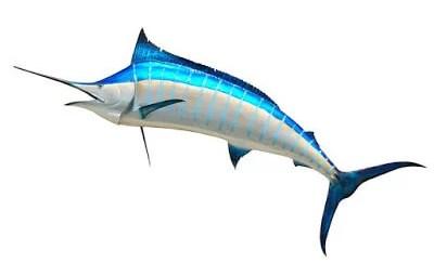 मछलियों के बारे में 50 रोचक तथ्य | 50 Facts about Fishes in Hindi