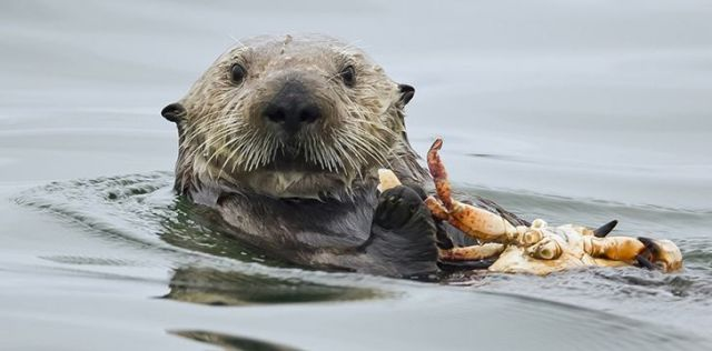 Otters are expert hunters.