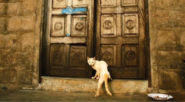 A cat standing infront of huge old-looking doors