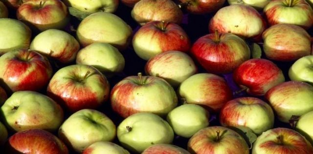 Apples bobbing up and down and in water