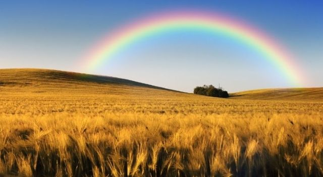 A rainbow beaming across wheat field