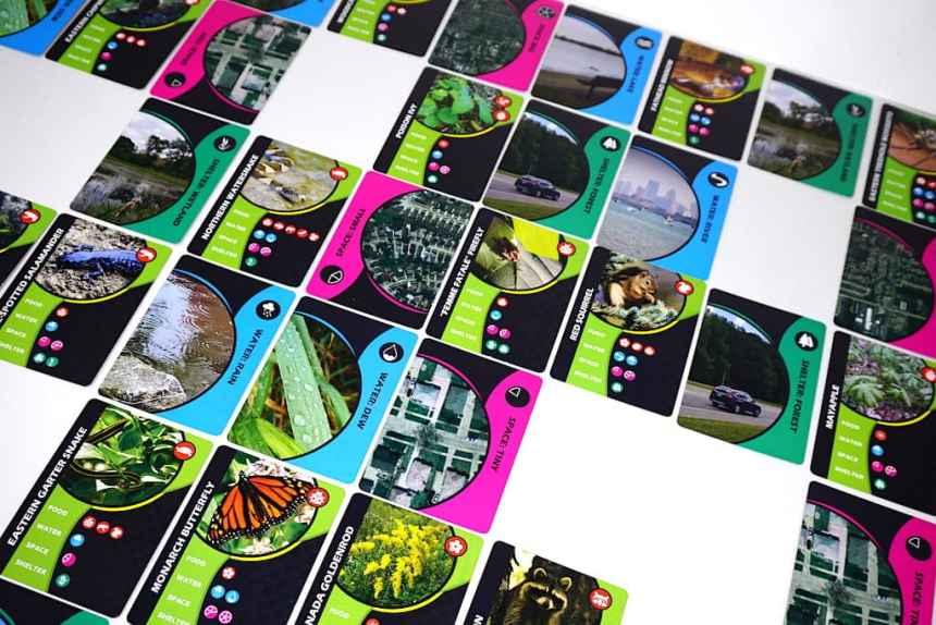 web of wildlife cards with shelter, water, space, and food.