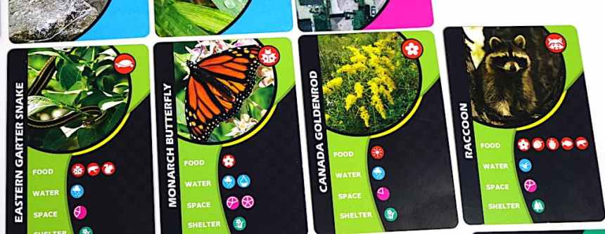 Wildlife cards: Eastern Garter Snake, Monarch Butterfly, Canada Goldenrod, Raccoon