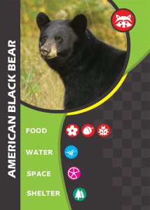 What in the Wild card: black bear