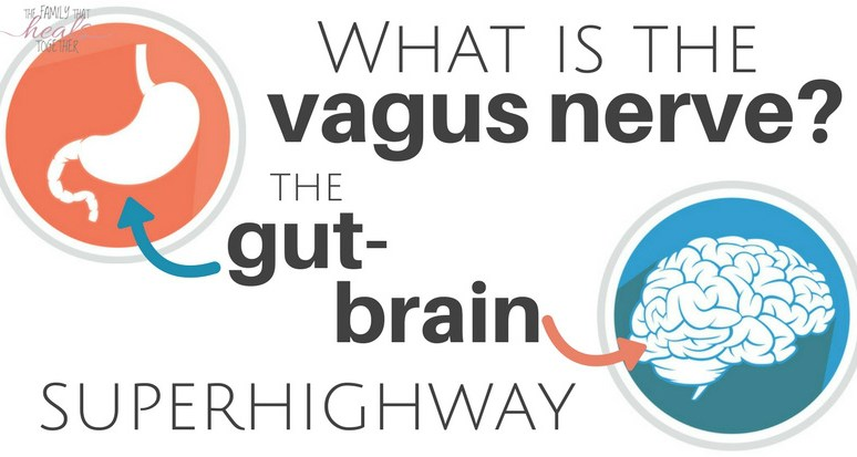 What Is The Vagus Nerve? The Gut-Brain Superhighway